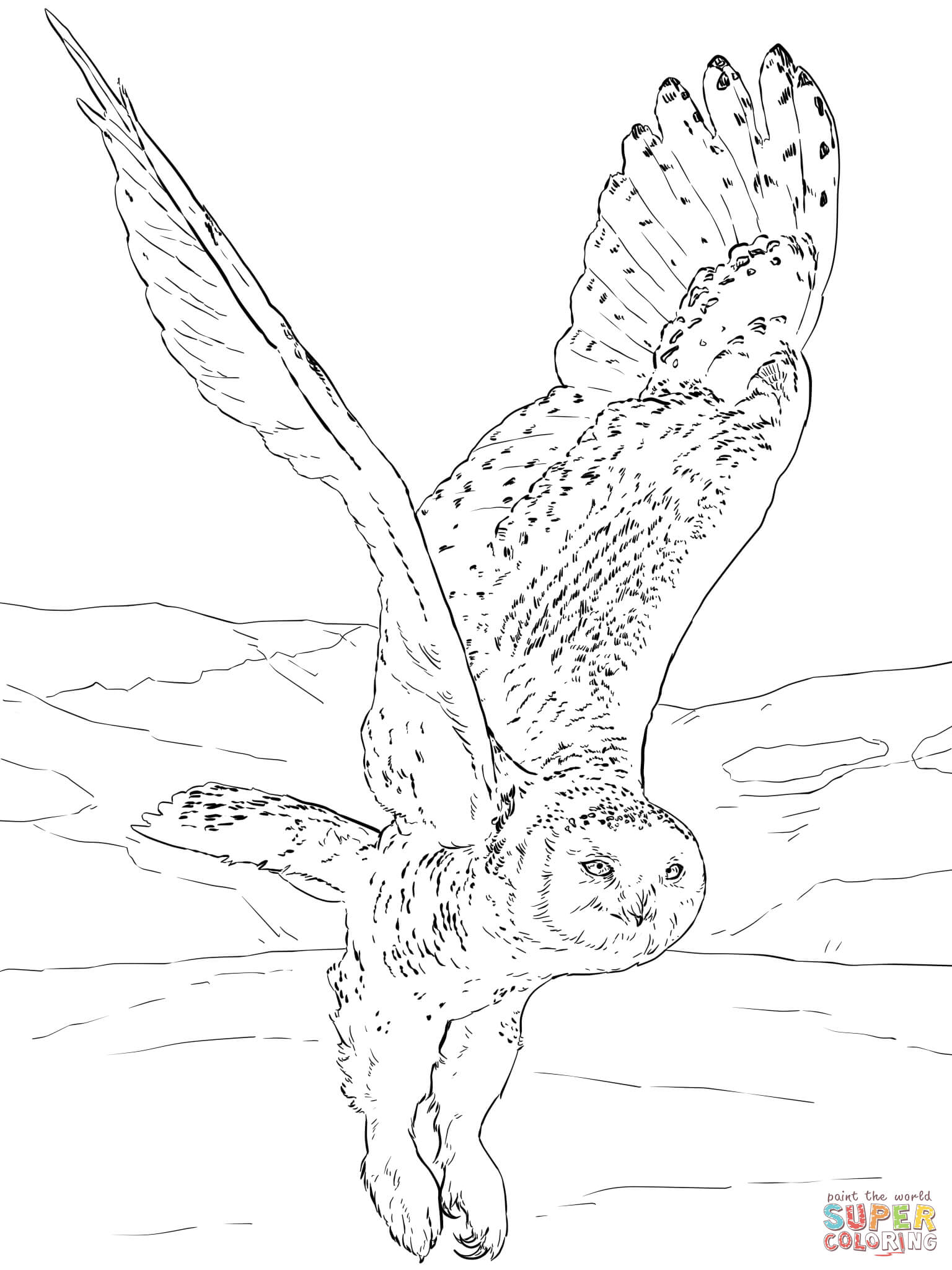 snowy owl coloring page free printable coloring pages
