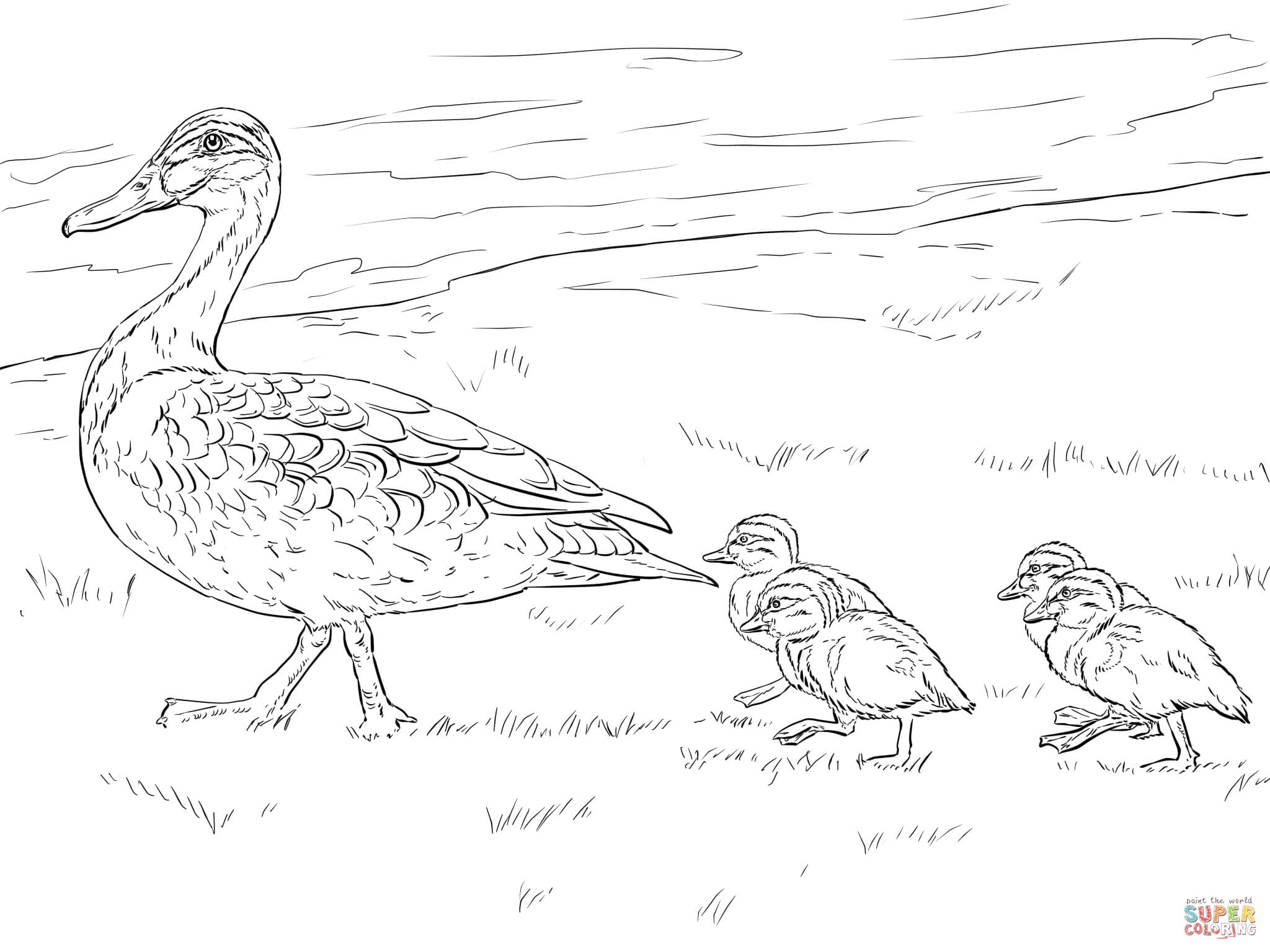 Duck And Ducklings Walking Coloring Page
