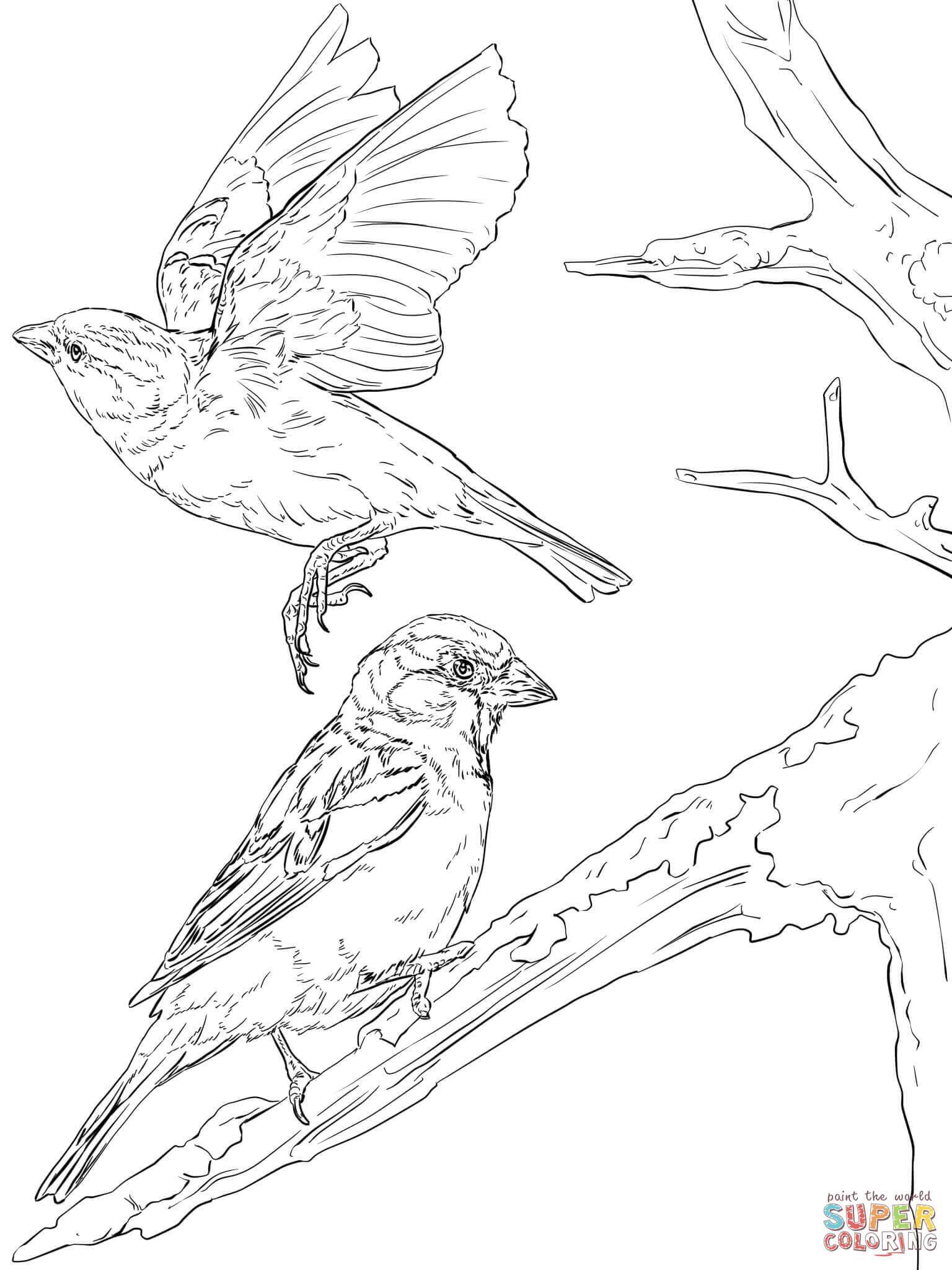 English Sparrows Coloring Page