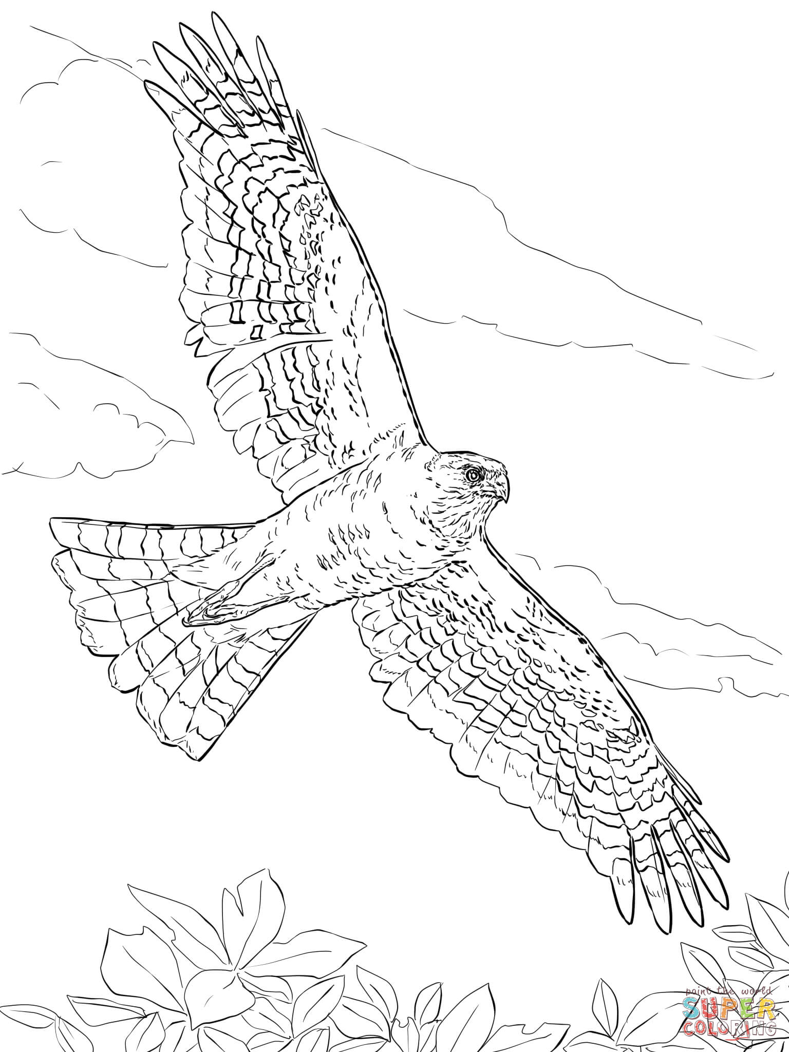 Sharp Shinned Hawk Coloring Page