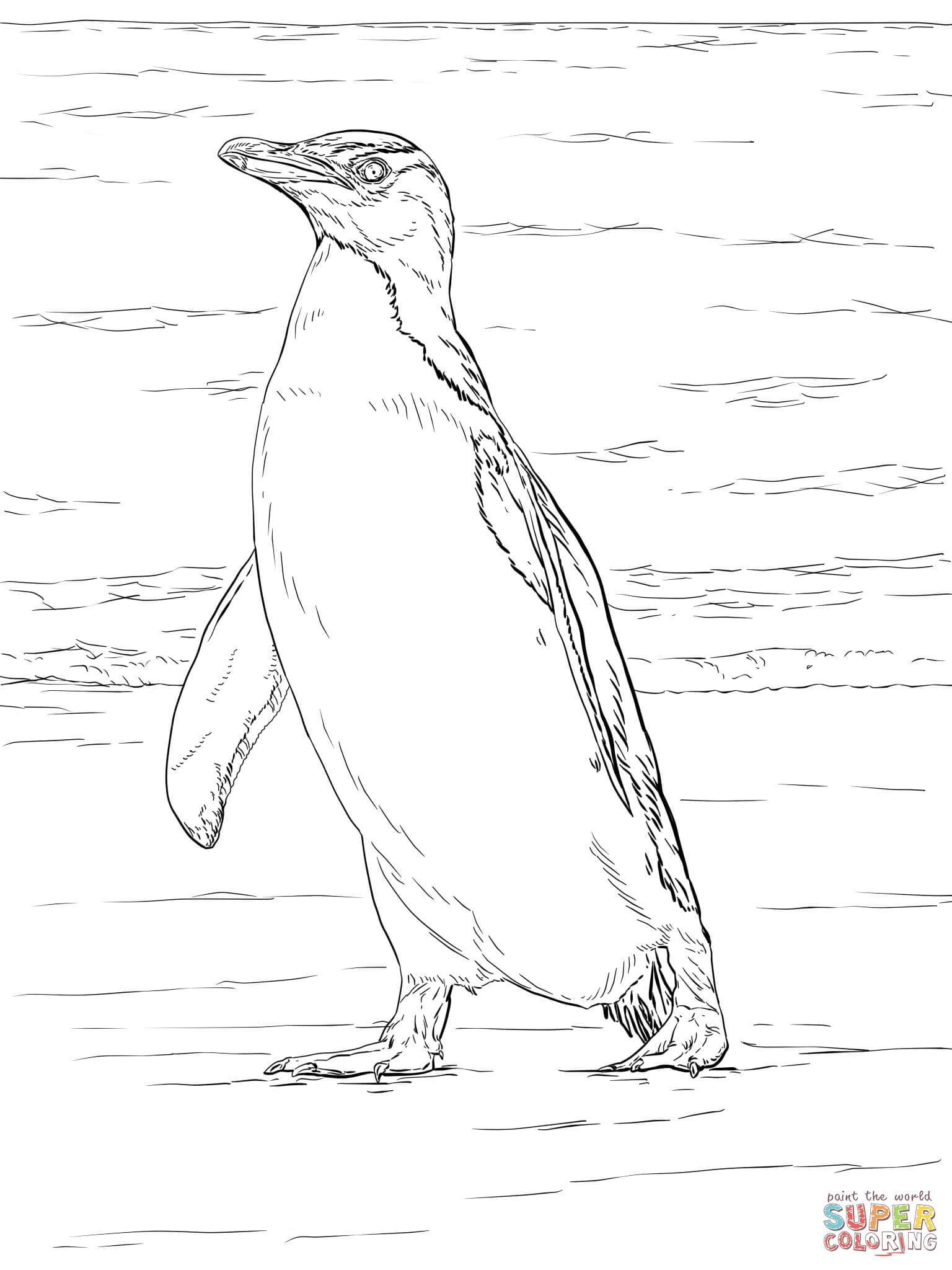 Yellow Eyed Penguin Coloring Page