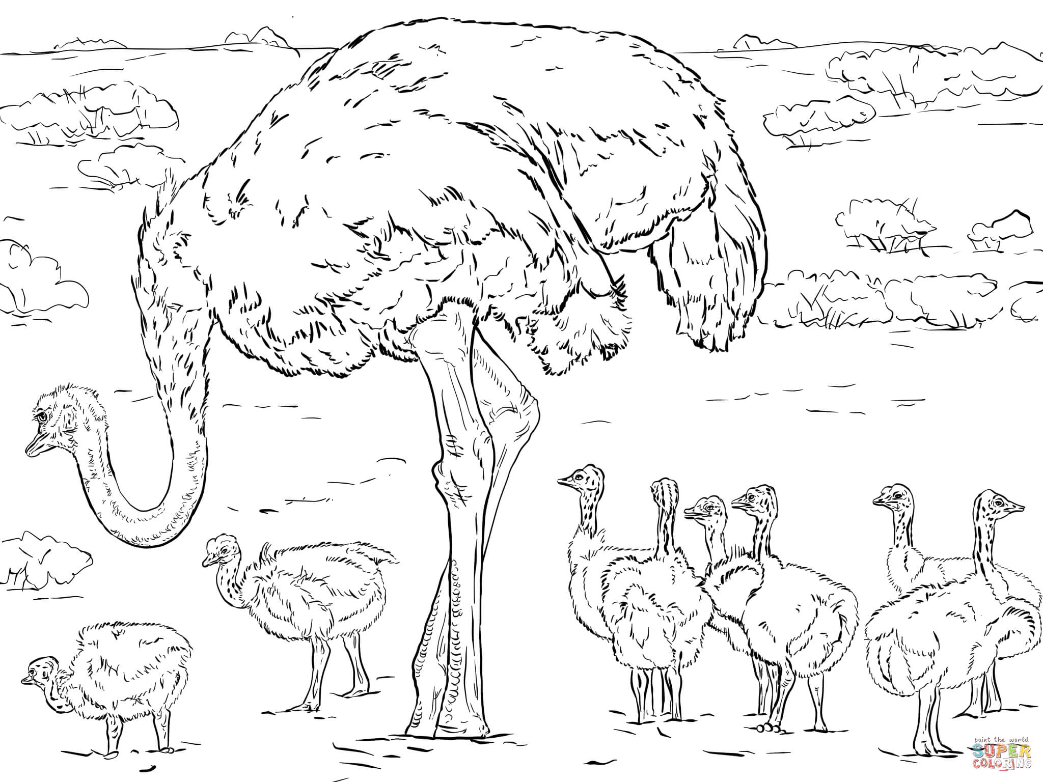Ostrich With Chicks Coloring Page