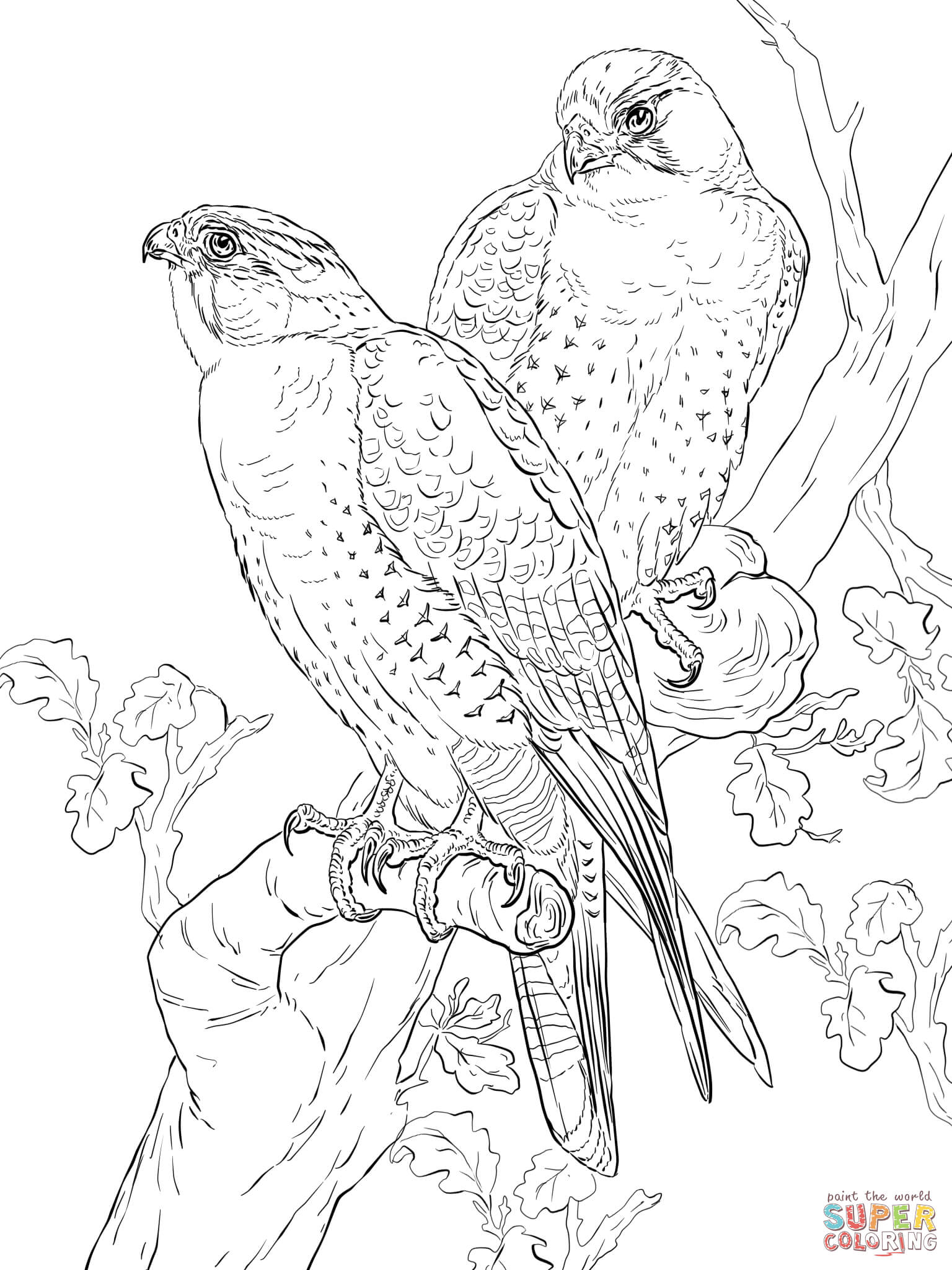 Peregrine Falcons Coloring Page