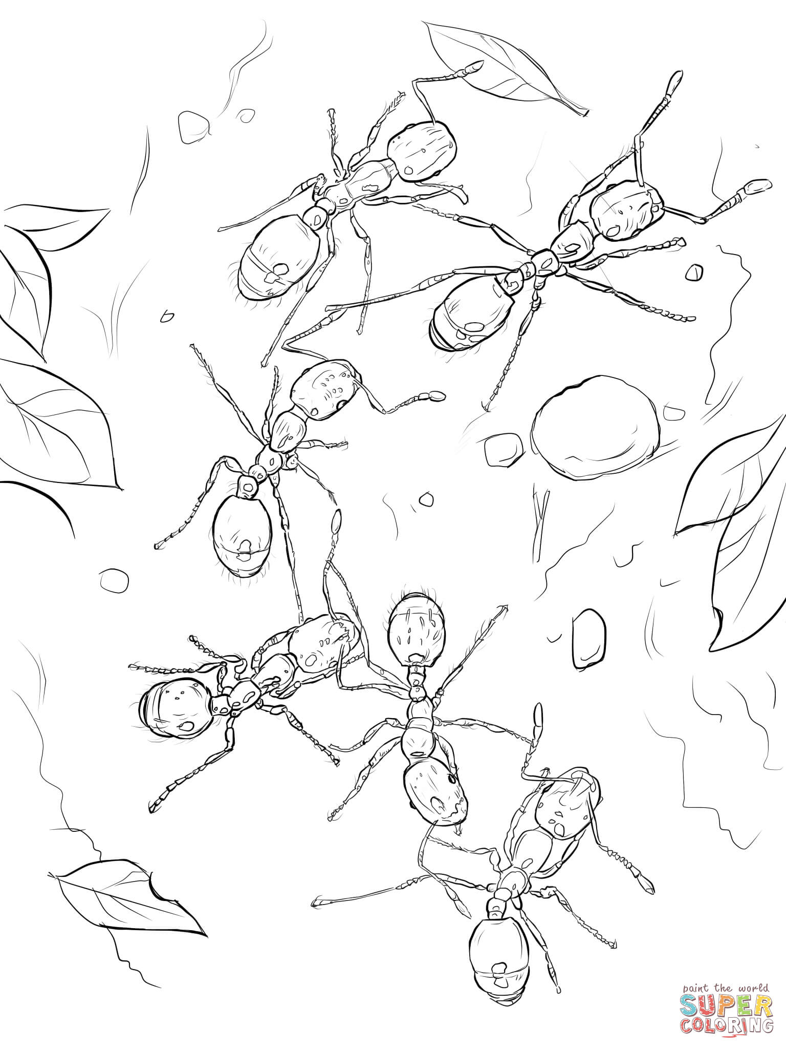 Fire Ants Coloring Page
