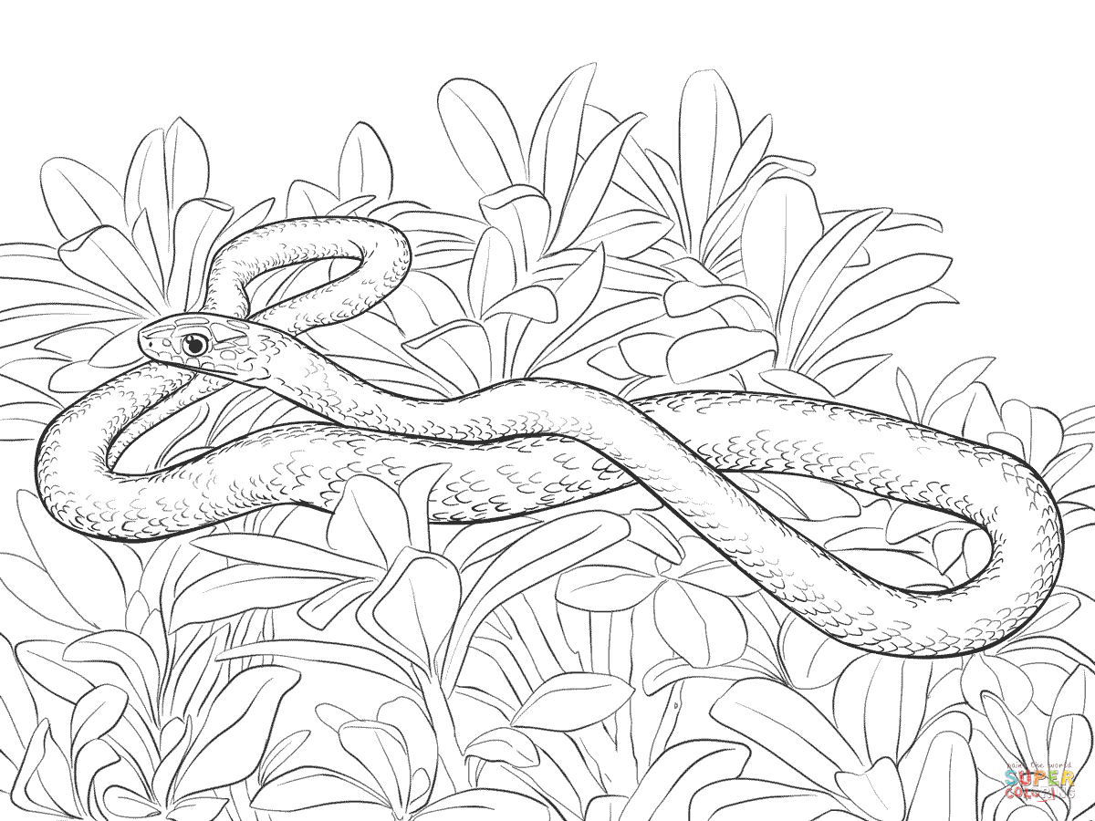 Black Racer Snake Coloring Page
