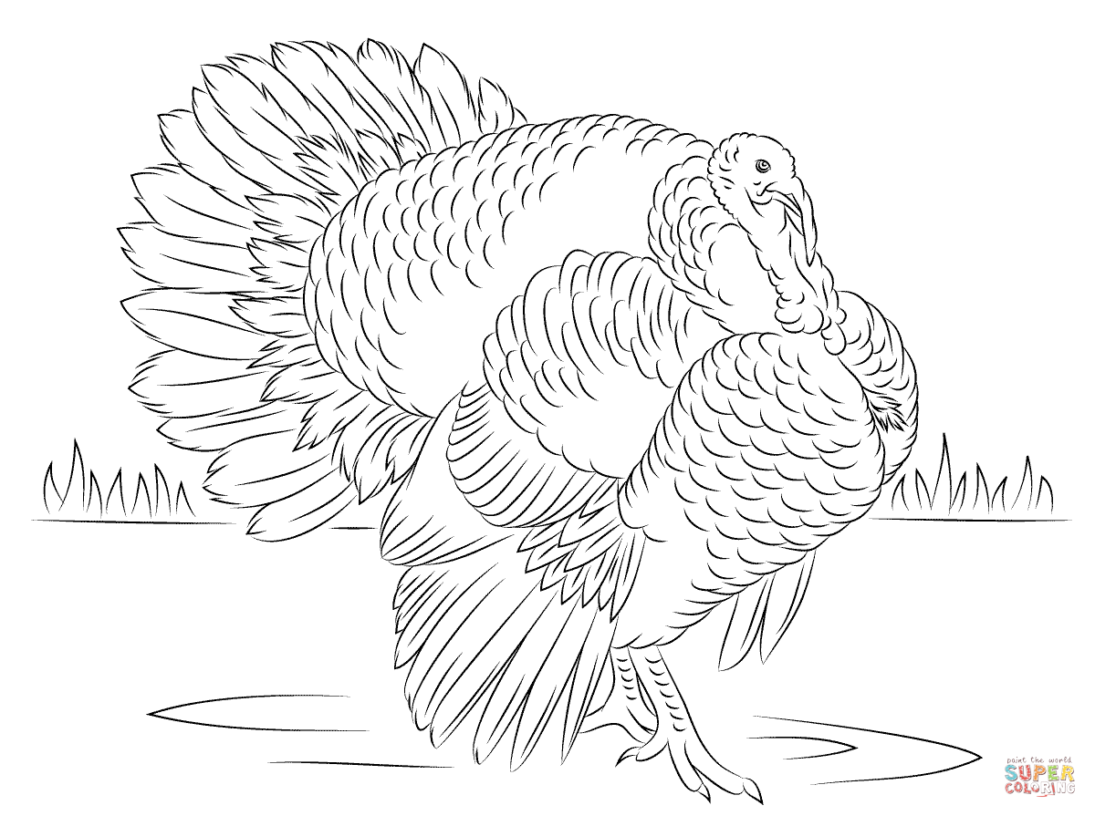 Bourbon Red Turkey Tom Coloring Page