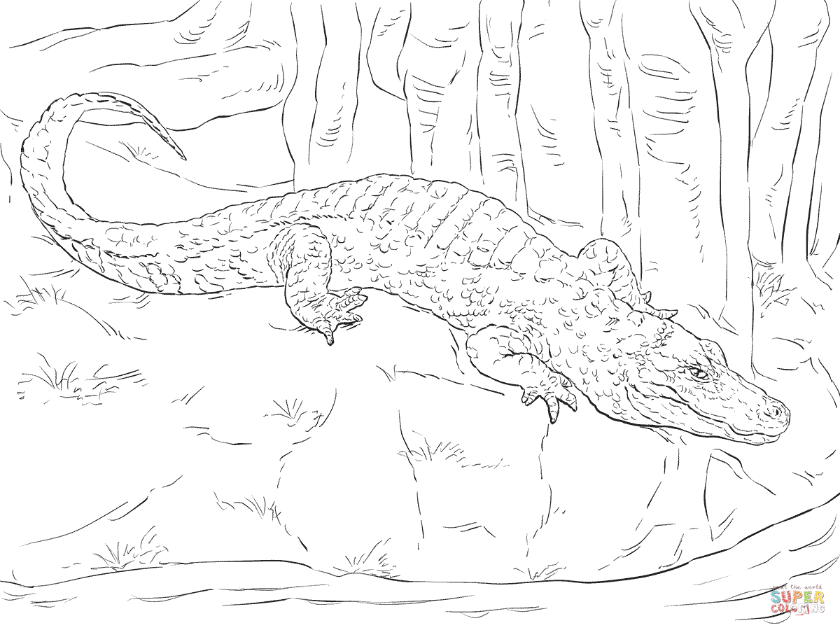 chinese alligator coloring page supercoloring com