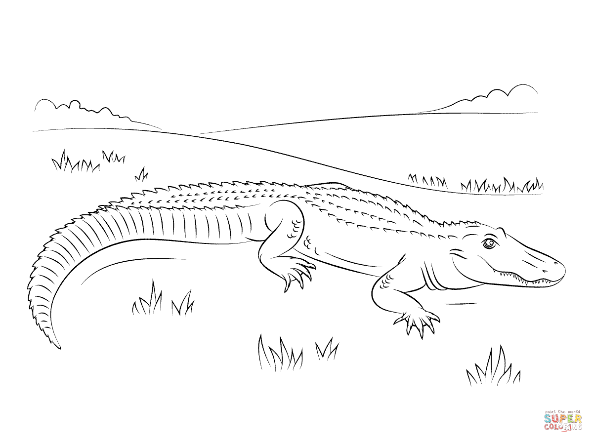 cute american alligator coloring page supercoloring com