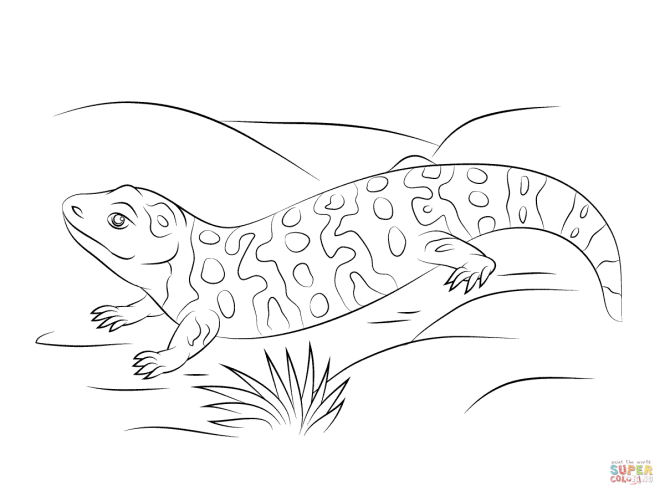 gila monster coloring page | Coloring Page for kids