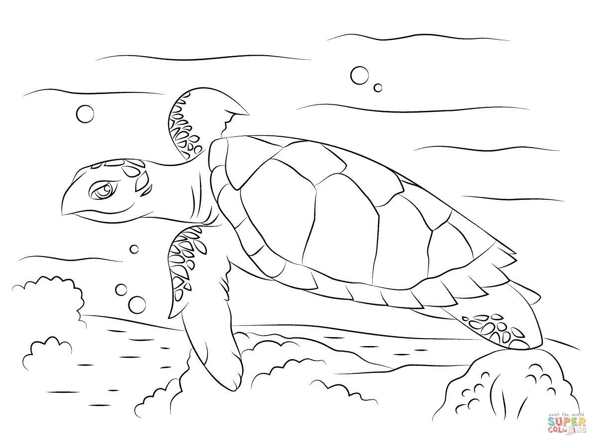 Cute Hawksbill Sea Turtle Coloring Page
