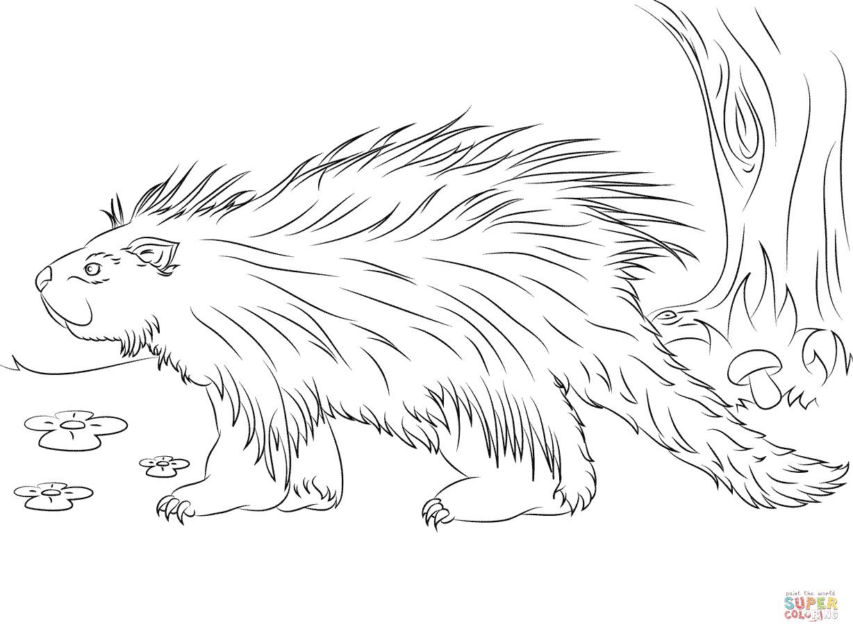 Cute Porcupine Coloring Page