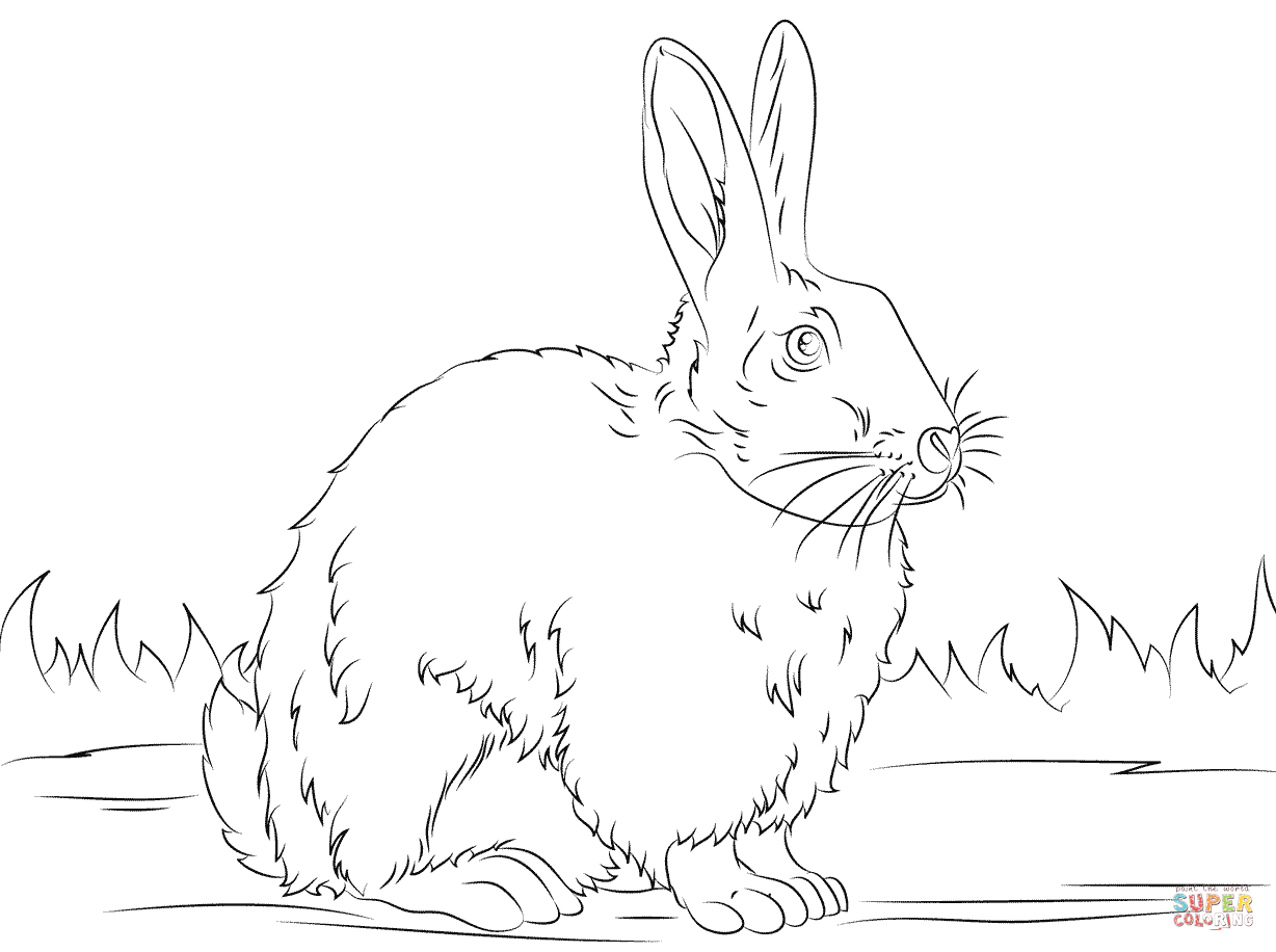 Cute Rabbit Coloring Page