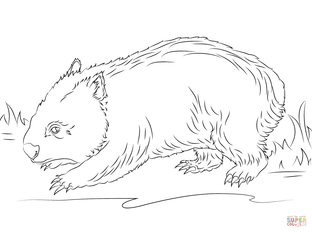 Cute Wombat Coloring Page