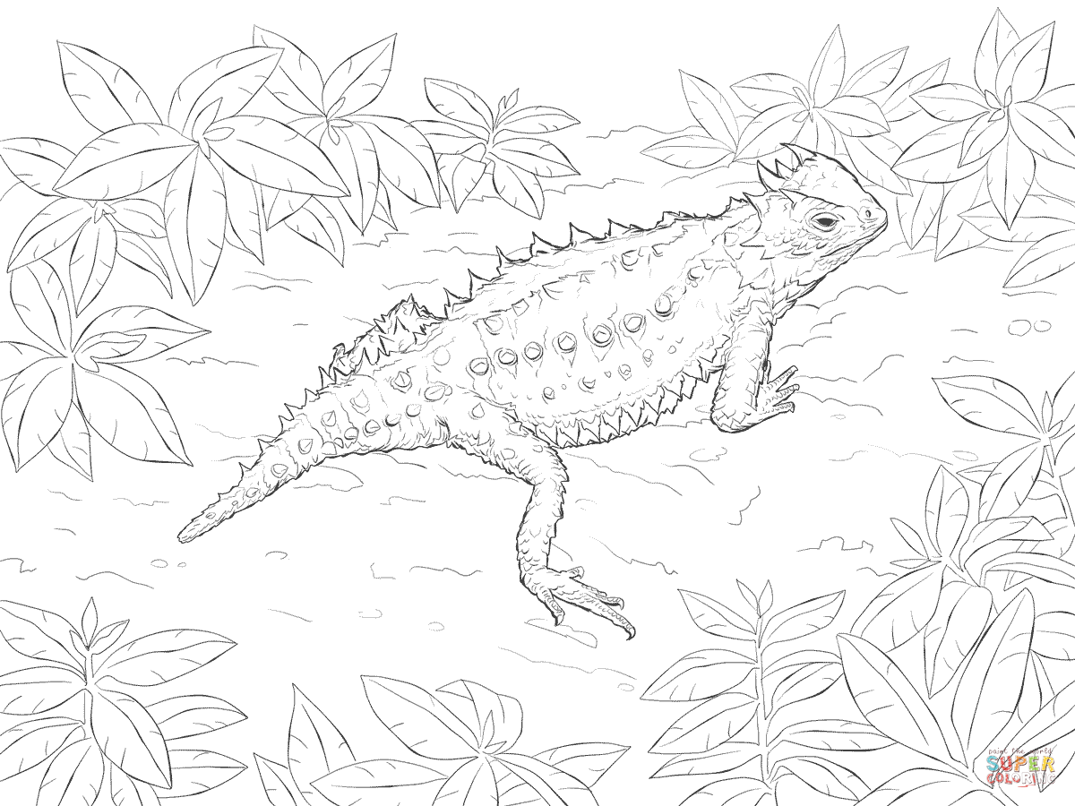 Desert Horned Lizard Coloring Page