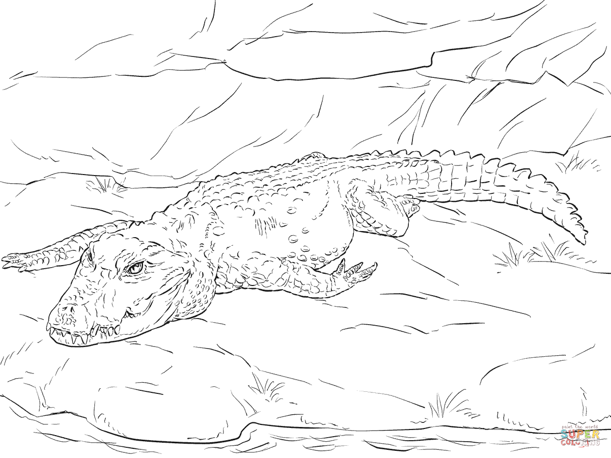 Dwarf Crocodile Coloring Page