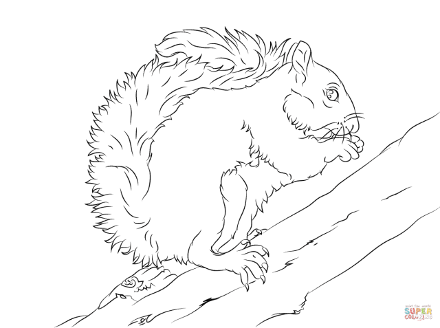 Eastern Grey Squirrel on A Tree coloring page  Free Printable