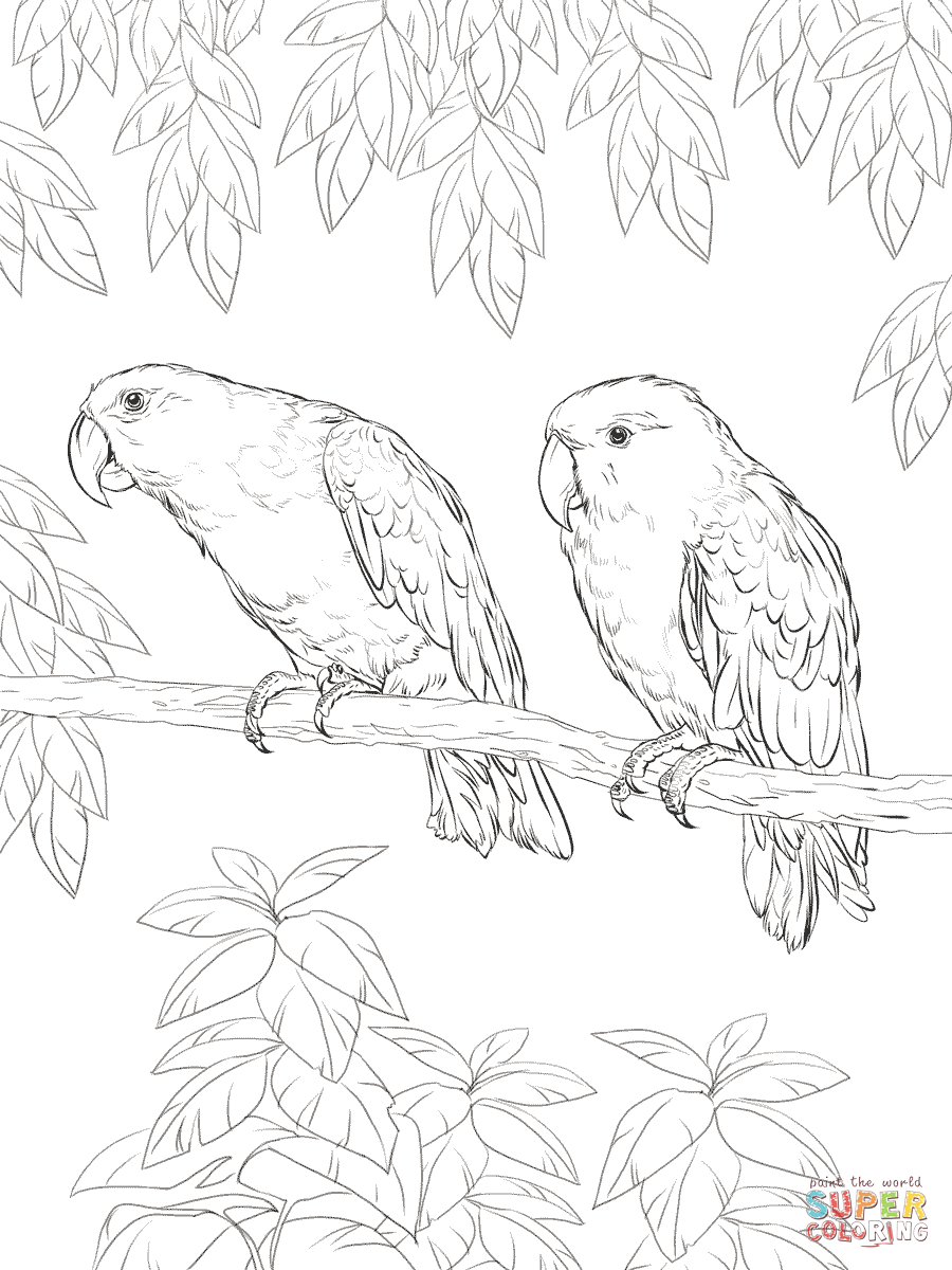 eclectus parrot coloring page free printable coloring pages