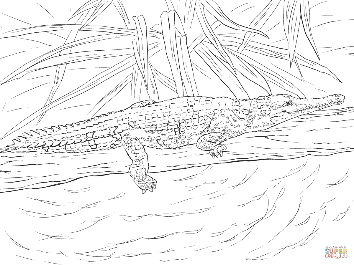 Freshwater Crocodile Coloring Page