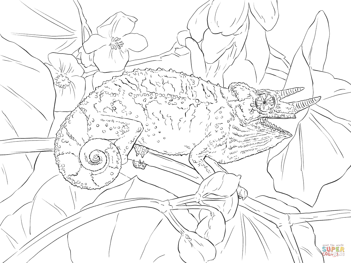 jacksons chameleon coloring page free printable coloring pages