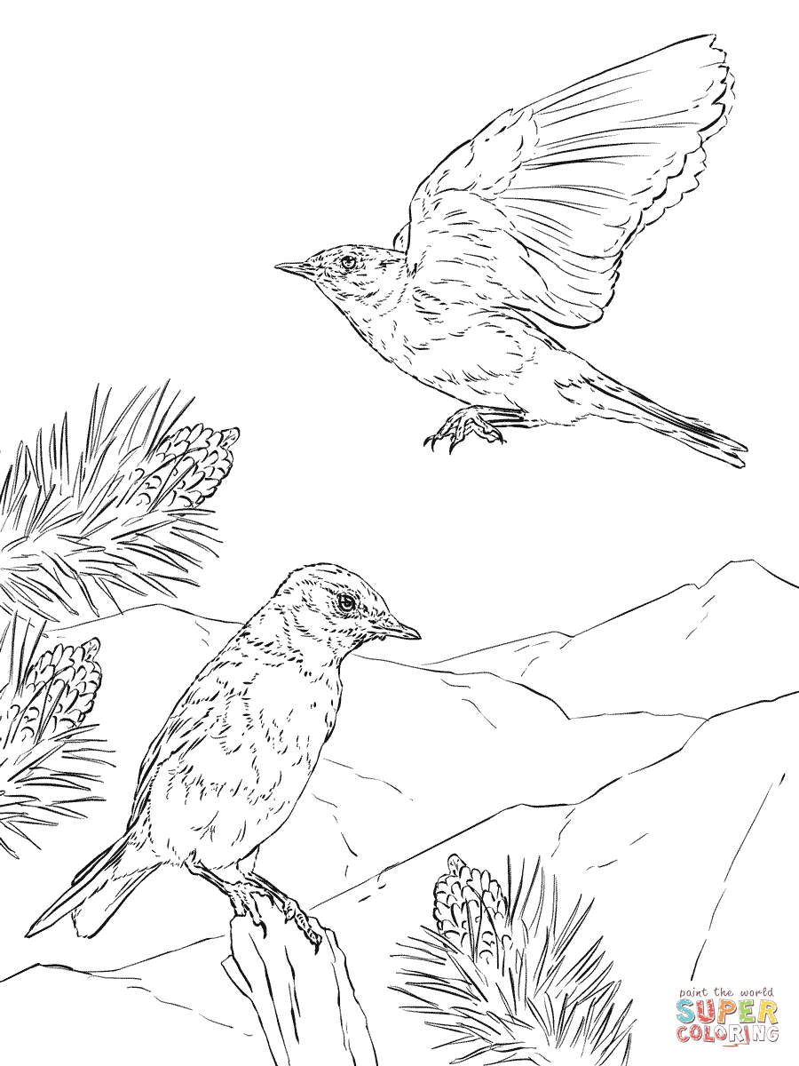 bluebird coloring pages free coloring pages