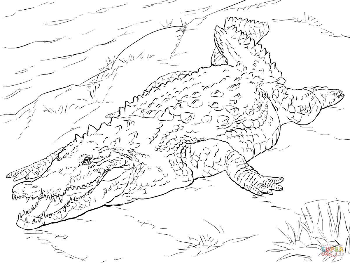 realistic alligator coloring pages pictures