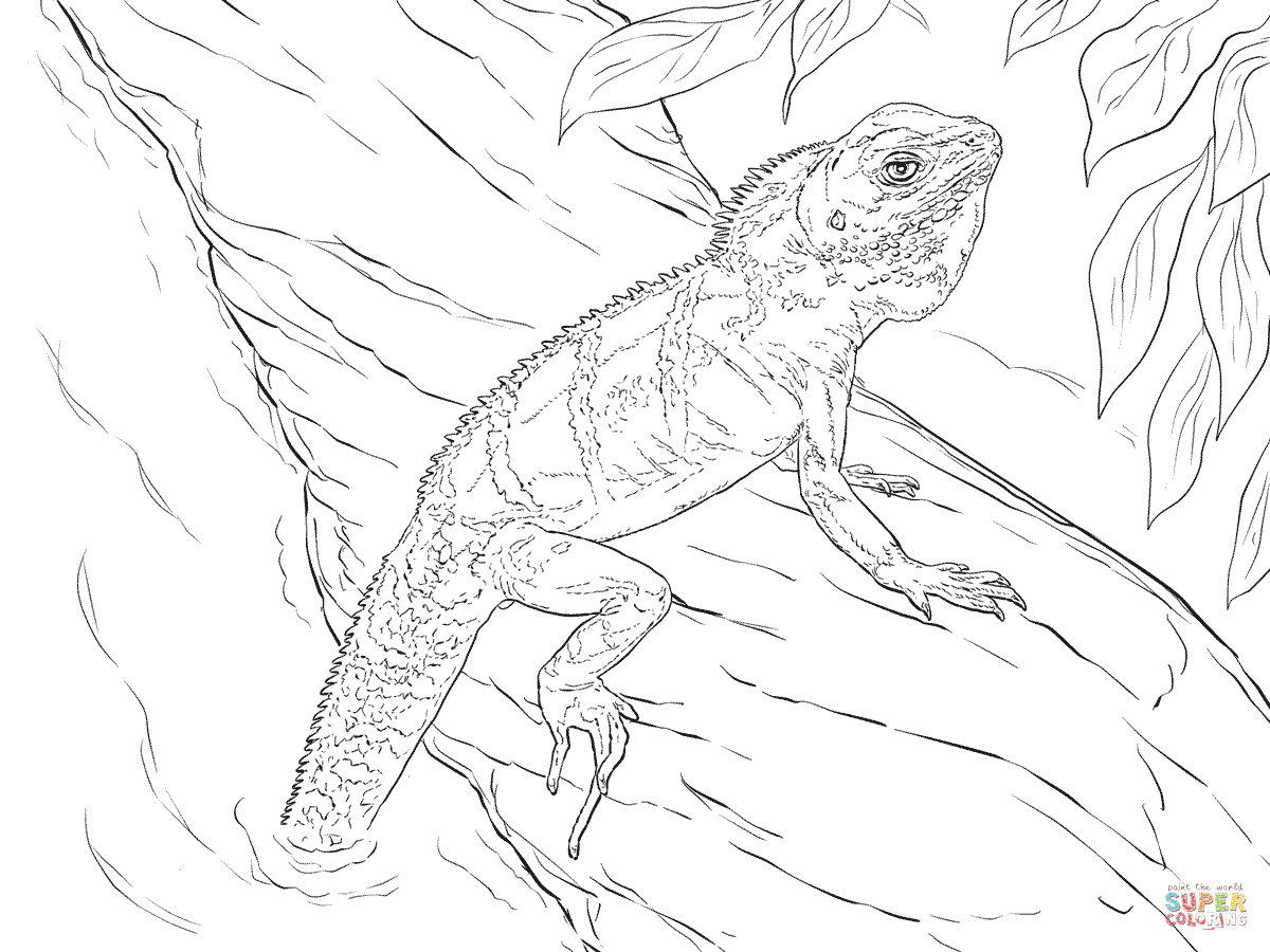 Realistic Chinese Water Dragon Coloring Page