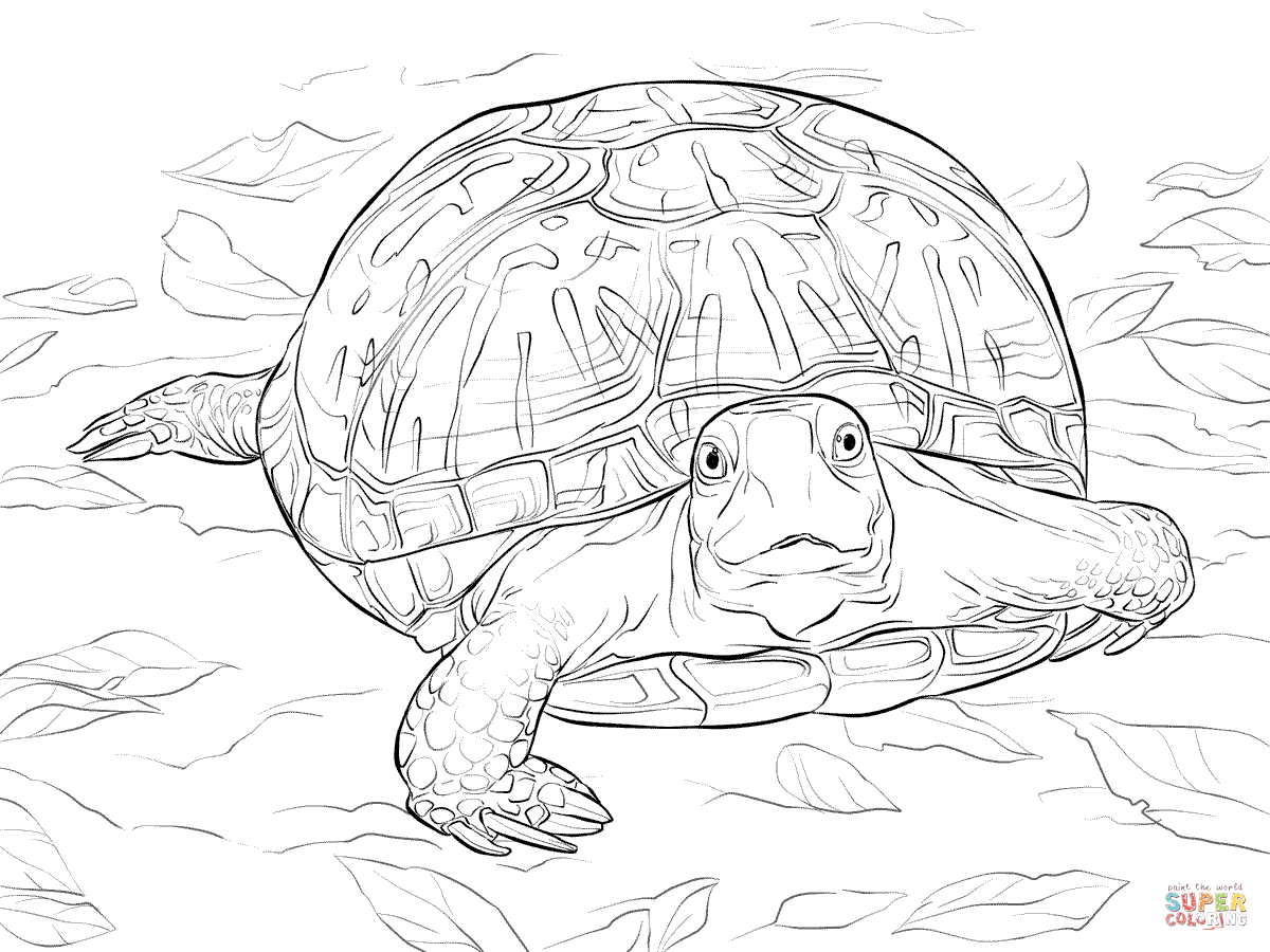 Realistic Ornate Box Turtle Coloring Page