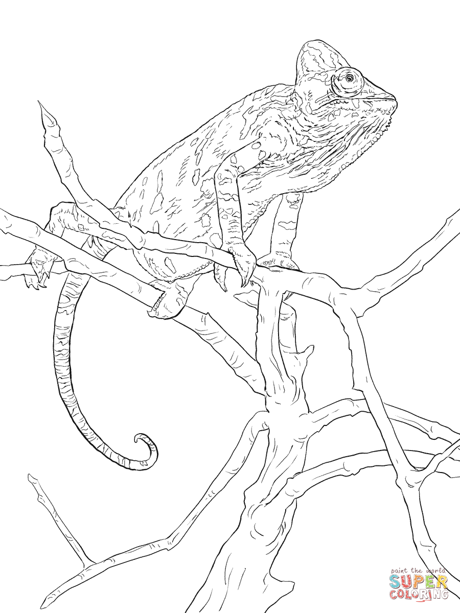 realistic veiled chameleon coloring page free printable coloring