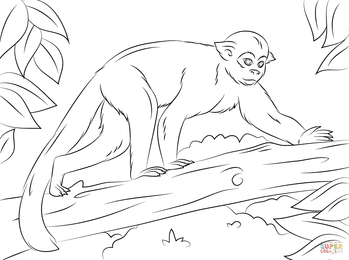 Coloring Pages Of Monkeys In Trees. free of palm cartoon. coloring ...