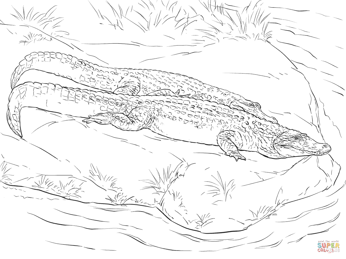 Two Black Caimans Coloring Page