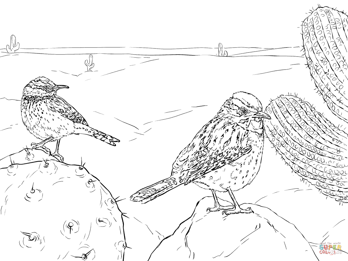 two cactus wrens coloring page free printable coloring pages