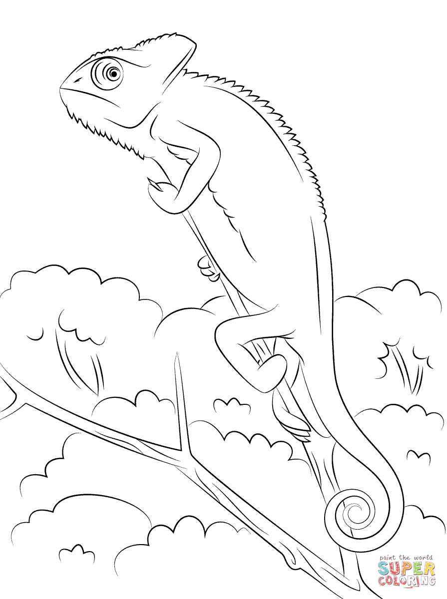 chameleon coloring pages free coloring pages