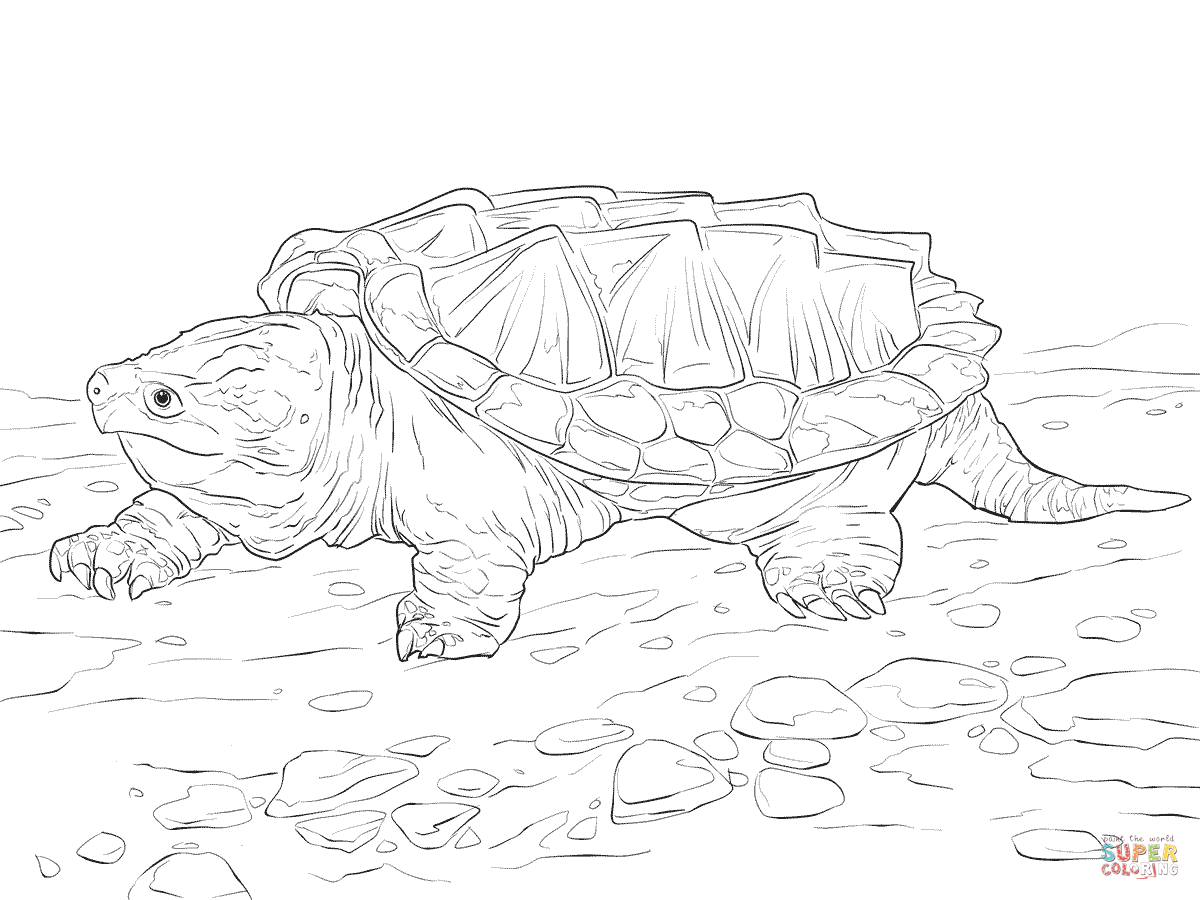 Walking Alligator Snapping Turtle Coloring Page