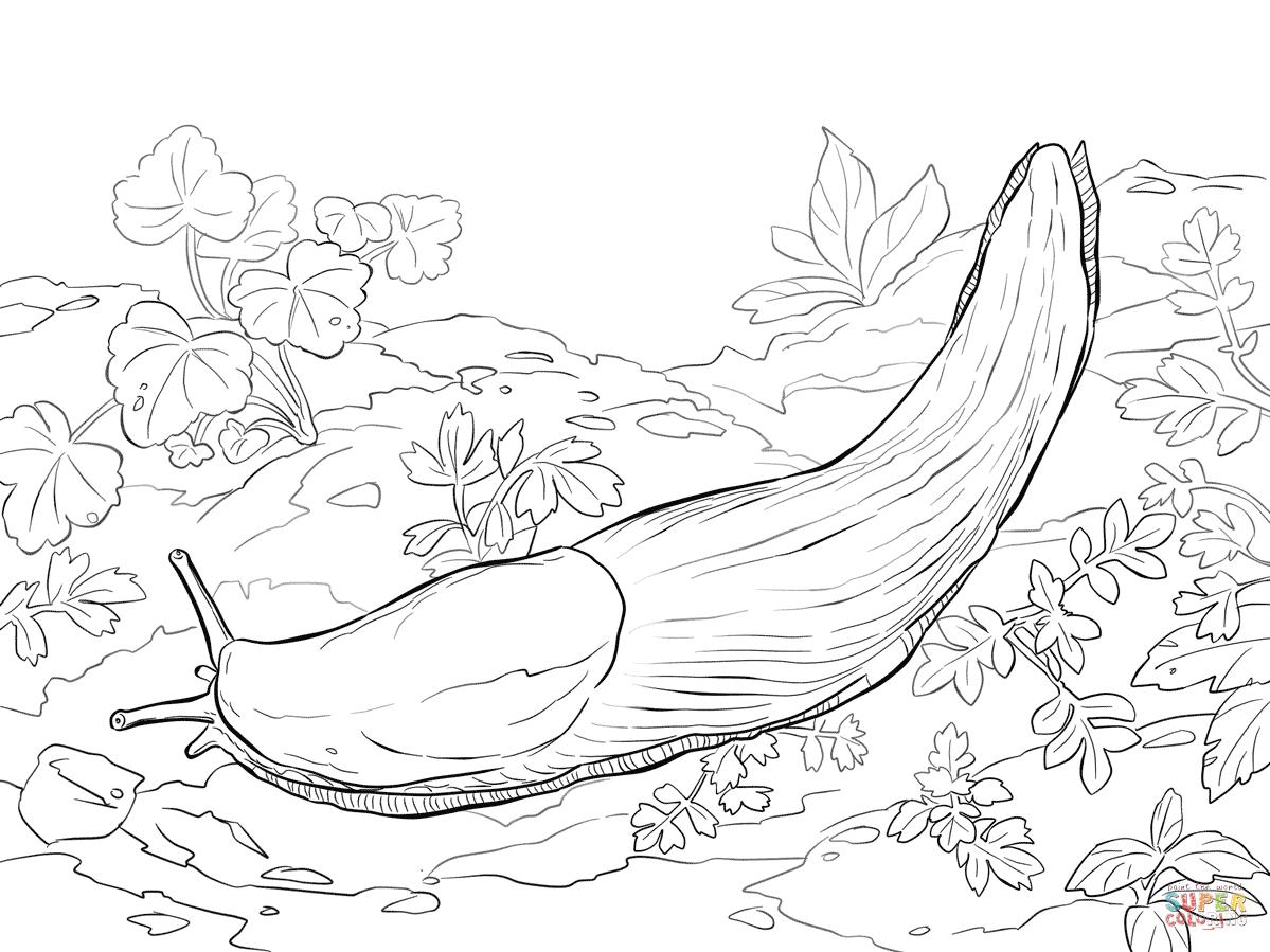 Grenuke Slug