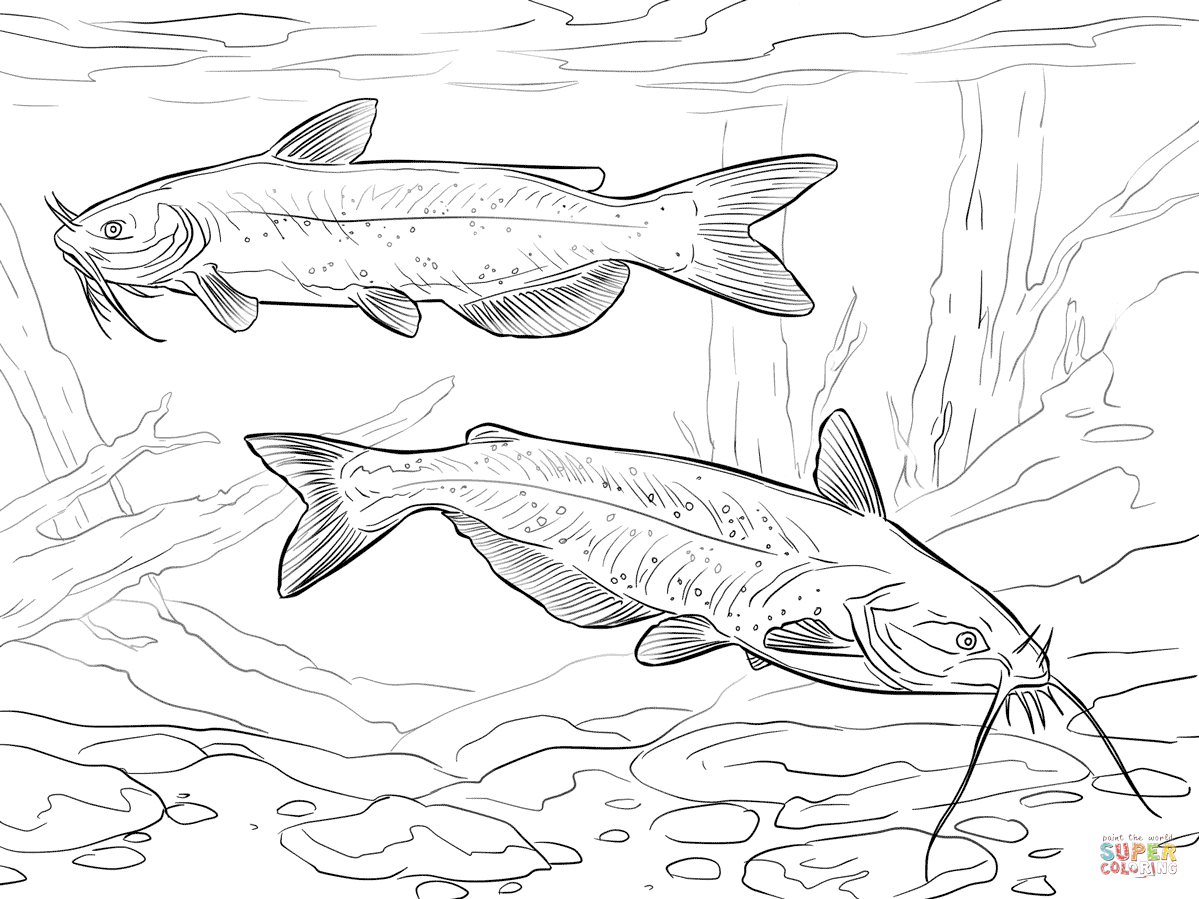 Catfish Coloring Pages Free Coloring Pages