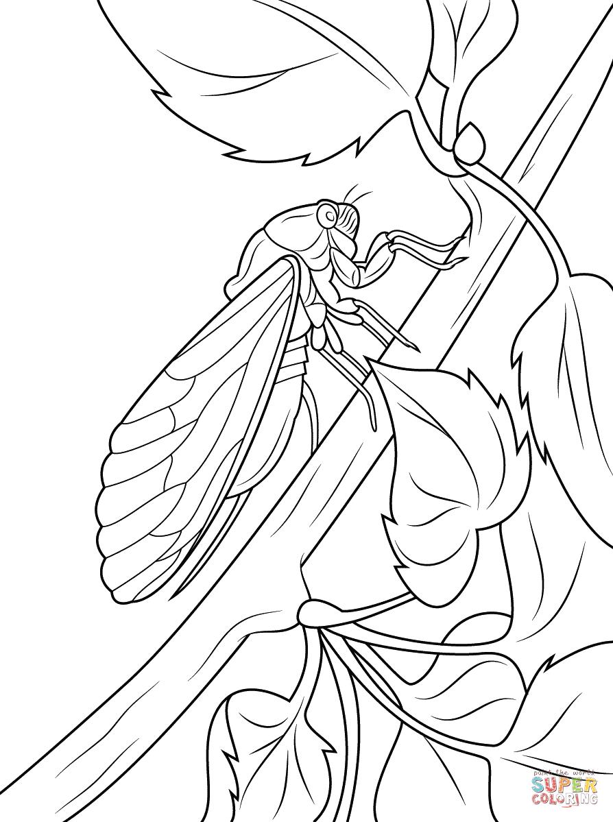 Cicada Sits On Tree Stem Coloring Page Free Printable