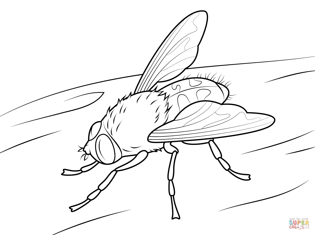 fly coloring pages free coloring pages