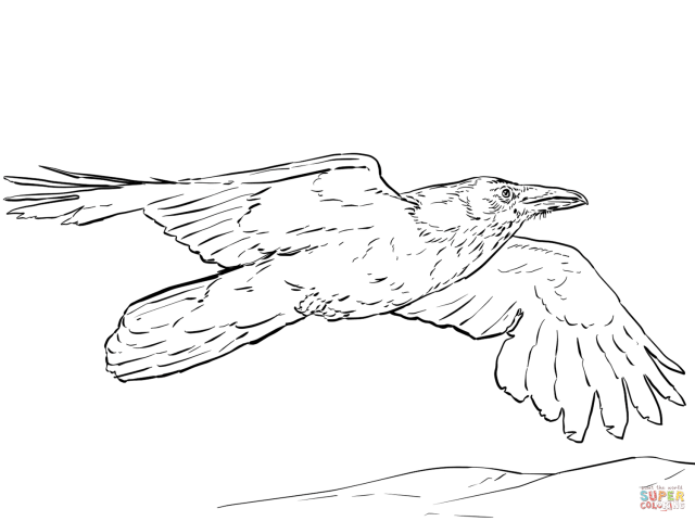 Flying Raven coloring page  Free Printable Coloring Pages