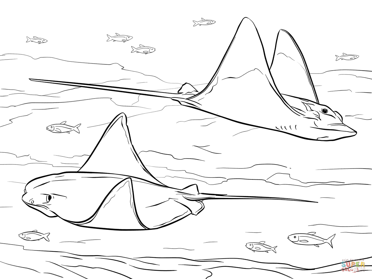 Cownose And Bull Eagle Rays Coloring Page