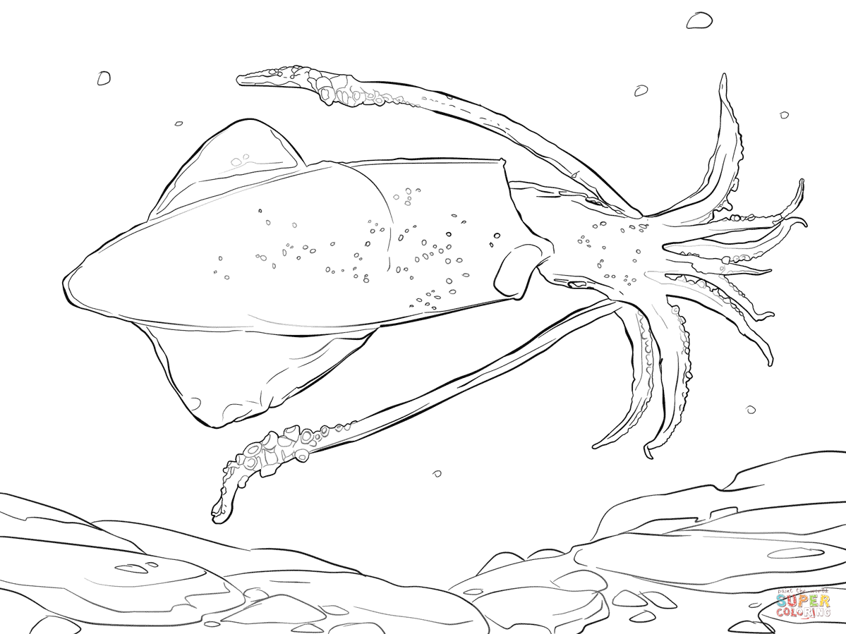 Common Squid Coloring Page