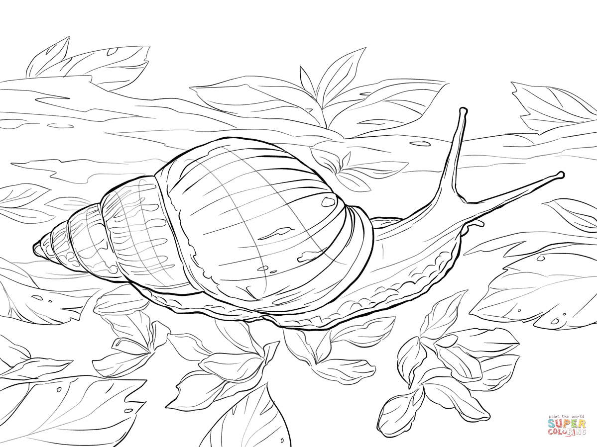 snail coloring pages free coloring pages