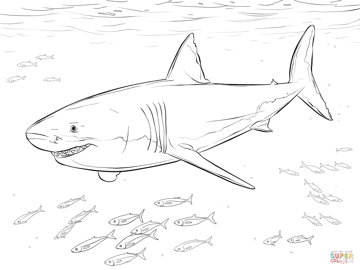 Great White Shark Coloring Worksheets