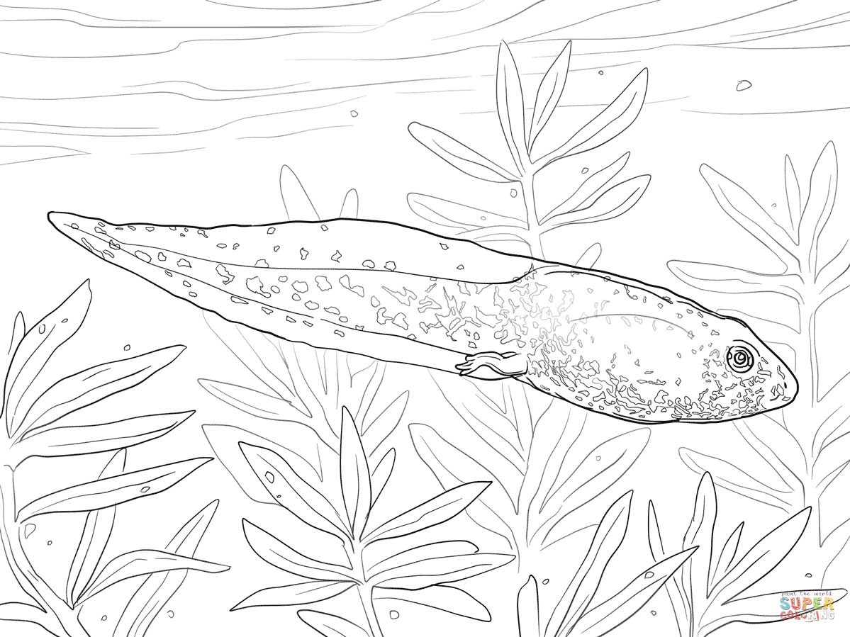 greenfrog tadpole coloring page free printable coloring pages