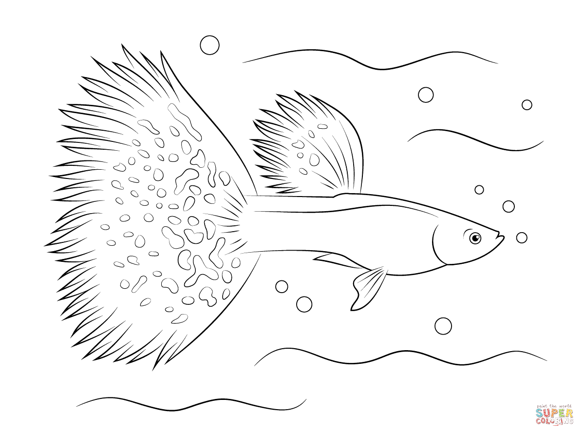 Siamese Fighting Fish Coloring Pages Coloring Pages