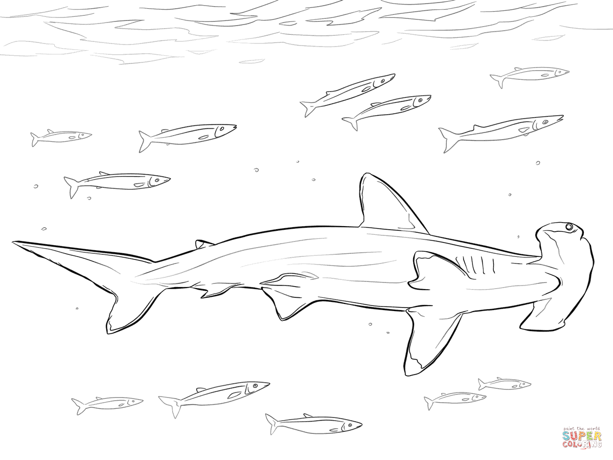 Great White Shark Coloring Worksheet