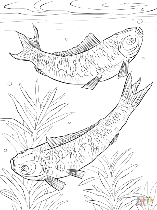 Koi Fishes coloring page  Free Printable Coloring Pages