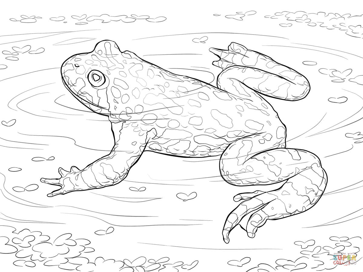 Oriental Fire Bellied Toad Coloring Page
