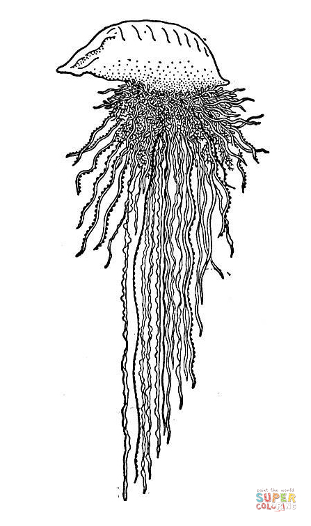 man o war jellyfish coloring page free printable coloring pages