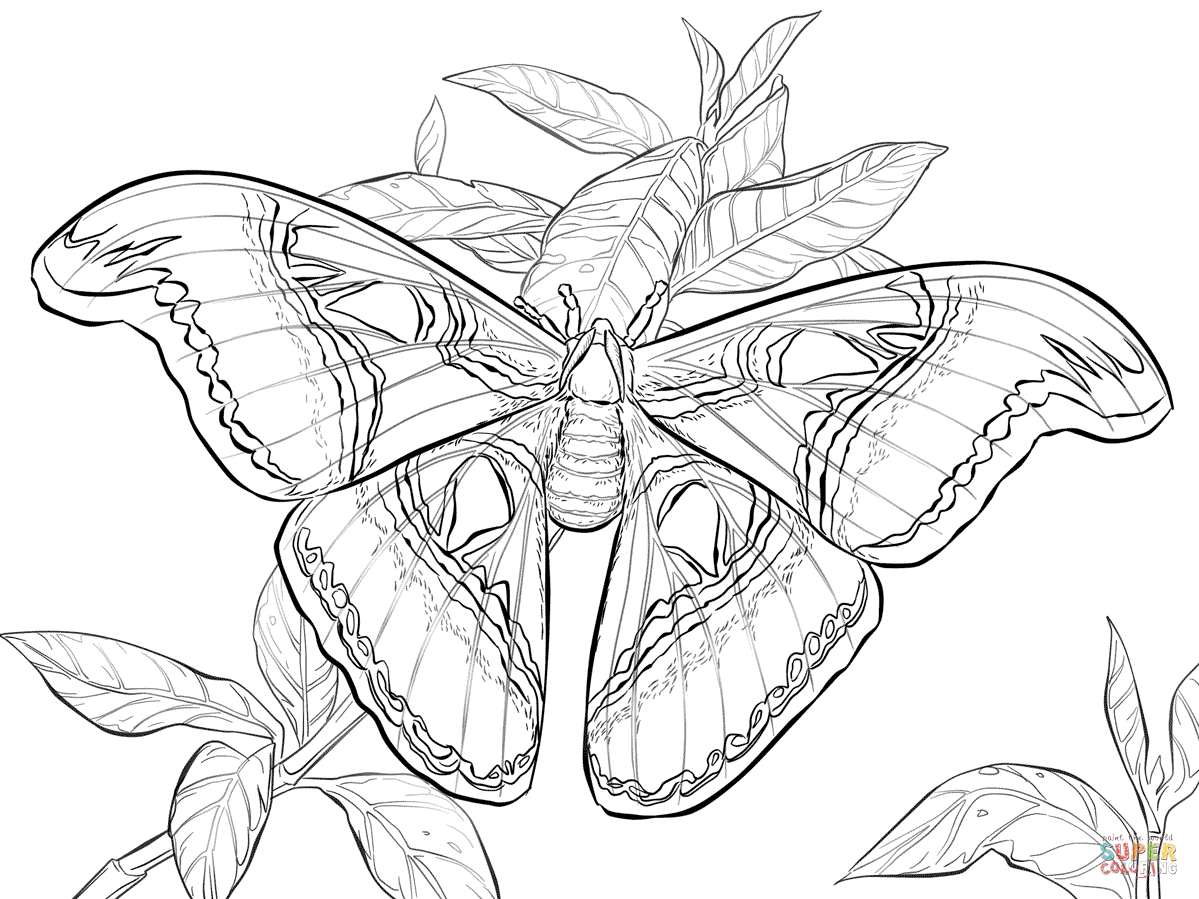 moth coloring pages free coloring pages