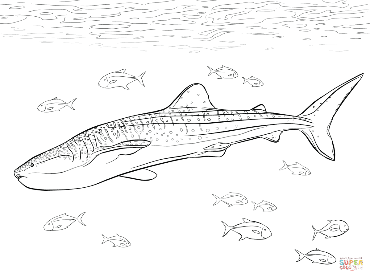 Realistic Whale Shark Coloring Page Free Printable Coloring Pages